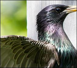 bird removal Rowlett