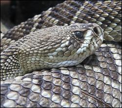 snake removal Rowlett